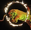 Цирки в Верхнем Уфалее